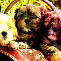 Cute Terrier Puppies by Marvin Blaine