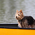 Cutest Dog Ever - Animal - 011342 by DC Photographer