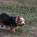 Cutest Dog Ever - Animal - 011345 by DC Photographer