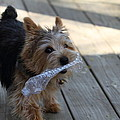 Cutest Dog Ever - Animal - 01135 by DC Photographer