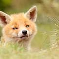 Cutie Face _red Fox Kit by Roeselien Raimond