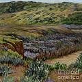 Cuyama Muddy by Betsee  Talavera