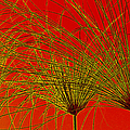Cyperus Papyrus Abstract by Ben and Raisa Gertsberg