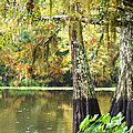 Cypress And Moss by Southern Tradition
