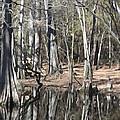 Cypress Bog by Jeanne A Martin