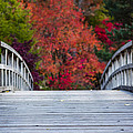 Cypress Bridge by Sebastian Musial