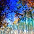 Cypress Fog 3 by Sheri McLeroy