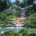 Cypress Garden Waterfalls by Bob Phillips