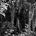 Cypress Knee by Phil Penne