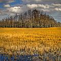 Cypress Marsh by Debra and Dave Vanderlaan