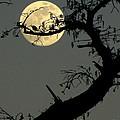 Cypress Moon by Joe Jake Pratt