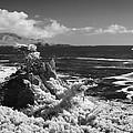 Cypress Point Ll by Rich Stedman