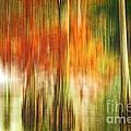 Cypress Pond by Scott Pellegrin