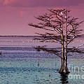 Cypress Purple Sky by Scott Hervieux