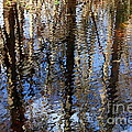 Cypress Reflection Nature Abstract by Carol Groenen