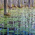 Cypress Reflections by Susan Cole Kelly