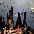 Cypress Roots by Christiane Schulze Art And Photography