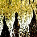 Cypress Roots by Jack Mayer