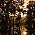 Cypress Sunrise by Ron Weathers