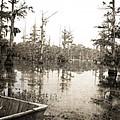 Cypress Swamp by Scott Pellegrin