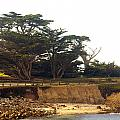 Cypress Trees On 17 Mile Drive by Barbara Snyder