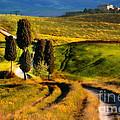 Cypresses Of Toscany by Jaroslaw Blaminsky