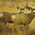 D Is For Deer by Priscilla Burgers