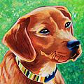 Dachshund Beagle Mixed Breed Dog Portrait by Robyn Saunders