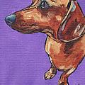 Dachshund by Greg and Linda Halom