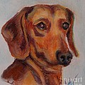Dachshund by Mindy Sue Werth