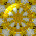 Daffodil And Easter Lily Kaleidoscope Under Glass by Rose Santuci-Sofranko