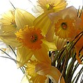 Daffodil Bouquet by Karen Molenaar Terrell