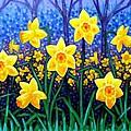 Daffodil Dance by John  Nolan