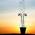 Daffodil Dawn by Tim Gainey