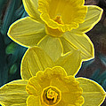 Daffodil Duet By Jrr by First Star Art