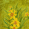 Daffodil by Laurie Williams