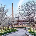 Daffodil Path by Susan Cole Kelly