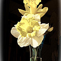 Daffodils by Bonnie Willis
