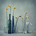 Daffodils by Dimitar Lazarov -