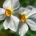 Daffodils by Dragica  Micki Fortuna