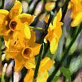 Daffodils by Lynne Jenkins