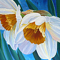 Daffodils Narcissus by Janet Zeh