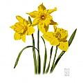Daffodils by Richard Harpum