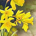 Daffodils by Rick Huotari