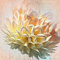 Dahlia Art by Kaye Menner