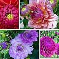 Dahlia Best Collage by Susan Garren