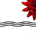 Dahlia Flower And Wavy Lines Triptych Canvas 3 - Red by Natalie Kinnear
