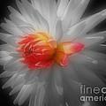 Dahlia Flower Beauty by Smilin Eyes  Treasures