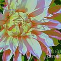 Dahlia In Pink And White by Dora Sofia Caputo Photographic Design and Fine Art