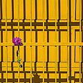 Dahlia In Yellow Gate by Garry Gay